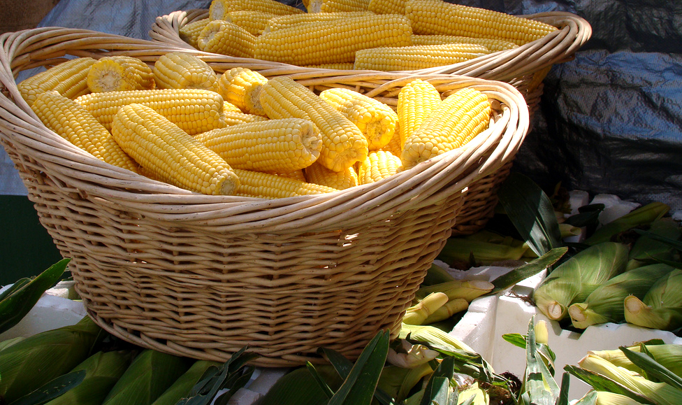 Don't ship luggage or wait at the airport – make the most of your trip to the Sweet Corn Festival in West Point, Iowa!